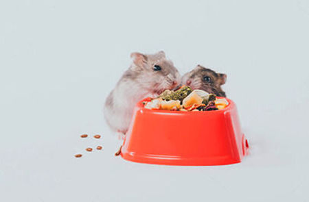 Picture for category Կրծողների կեր